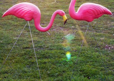 flamingo-prop-hire-vowed-amazed-4