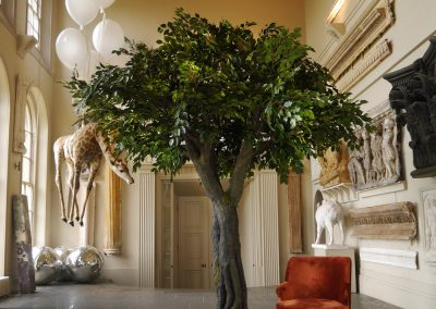 curious-tree-hire-vowed-amazed-3